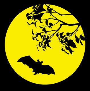 Открытки с ночью летучих мышей, картинки про магнитогорск